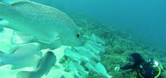 Nosy Be et ses environs pour des séjours croisière ou plongée