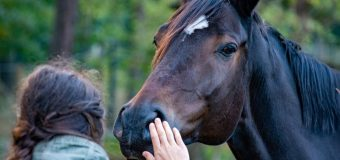 Ameliorer la relation entre l'homme et le cheval